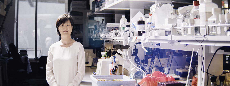 Qing Chen, M D , Ph D