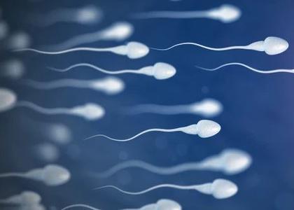 sperm_newspic