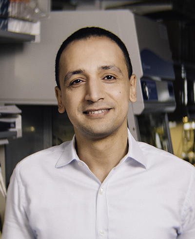 Mohamed Abdel-Mohsen, Ph.D.