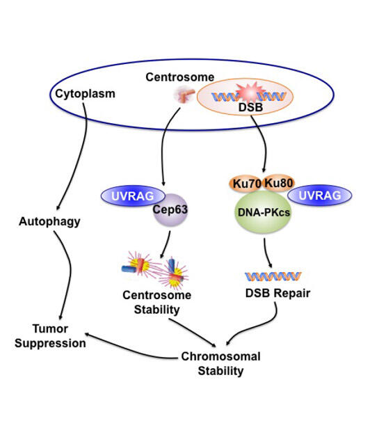 Chromosomal Instability and Cancer Progression-Recurrence